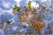 Rừng Gộp Mùa Thay Lá - Mùa Lá Đỏ Mà Chỉ Có Ở Tây Nguyên