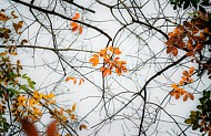Khám Phá Tây Nguyên Mùa Rừng Khộp Thay Lá