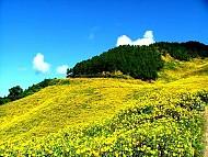 Lễ hội hoa dã quỳ ở núi lửa Chư Đăng Ya
