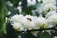 Những điều cần biết về mùa hoa cafe ở Tây Nguyên
