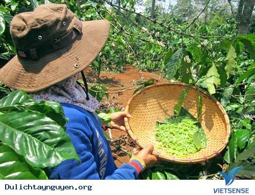 Về Tây Nguyên Ăn Nhộng Sâu Muồm,Ve Tay Nguyen An Nhong Sau Muom