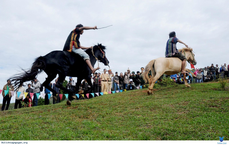 Về Tây Nguyên Khám Phá Trường Đua Ngựa Thiên Mã